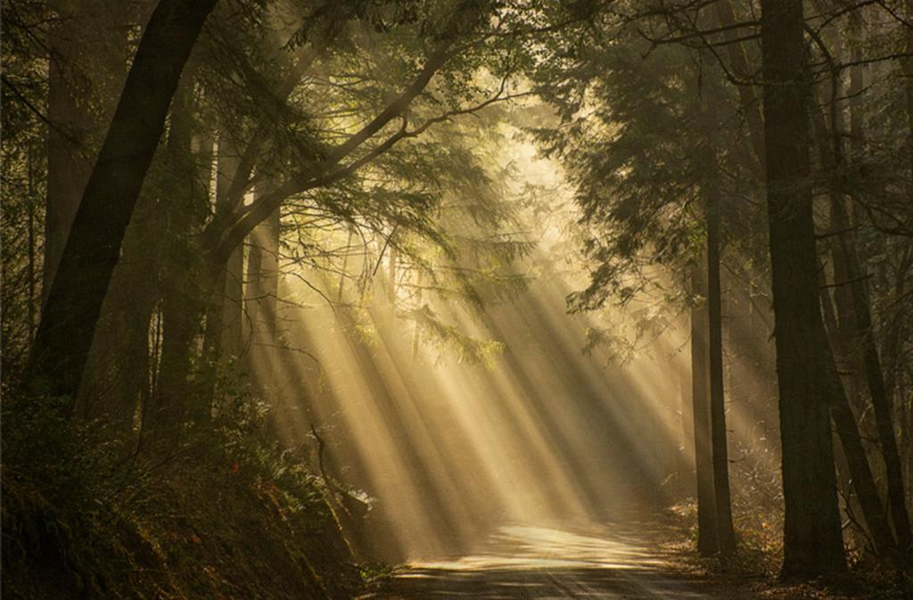 Sam Vittoria Mindfulness-Based Somatic Counseling Ashland Oregon